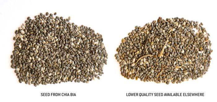 Chia Bia semienka - Chia Bia Seeds