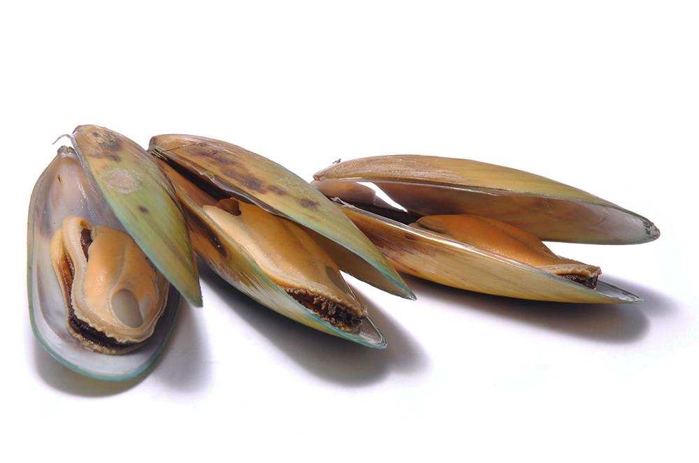 Perna Canaliculus (novozélandská zelená mušľa)